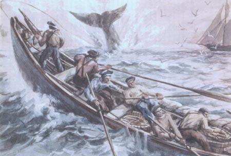 whalelines