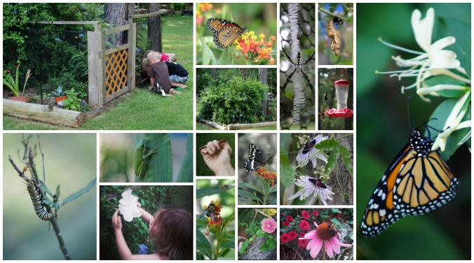 ButterflyGardenCollage5